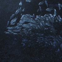 Fish school Giant Trevally  3DSMAX Particles System