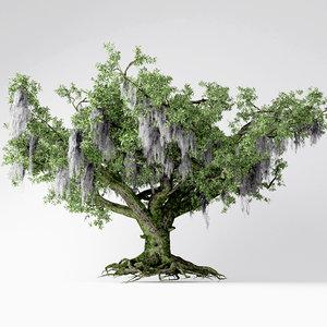 3D live oak tree model