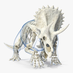 triceratops skeleton transparent skin 3D model