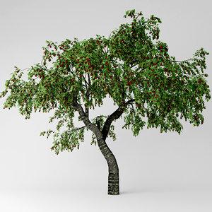 cherry tree model