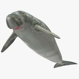 dugong dugon 3D model