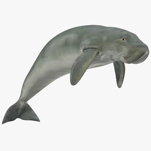 3D dugong swimming pose model