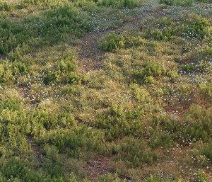 3D forest grass