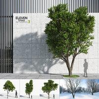 Eleven Trees 3 (+Growfx)