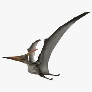 3D rigged pteranodon longiceps gray model