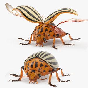 3D colorado potato beetle rigged model