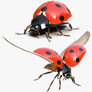 ladybug rigged 3D model