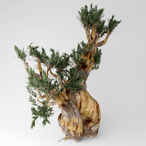 3D bristlecone pine tree