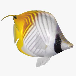 3D threadfin butterflyfish animation