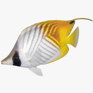 3D model threadfin butterflyfish rigged