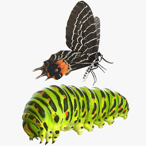 3D swallowtail butterfly caterpillar rigged