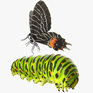 swallowtail butterfly caterpillar rigged model