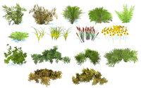 forest bush 3d collection
