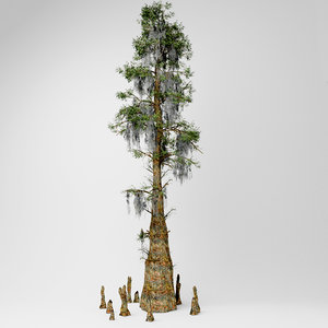 3D bald cypress tree
