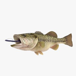 spotted bass 3D model