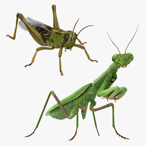 grasshopper mantis rigged 3D model