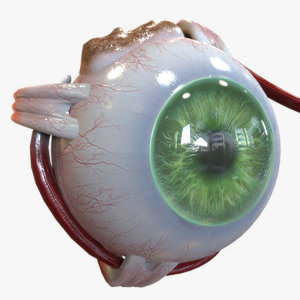 anatomy human eye 3D model