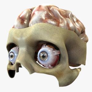 3D eye brain model
