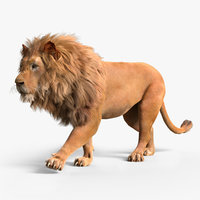Lion with Fur Rig Animated