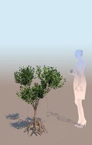 3D mangrove bush rhizophora mangle