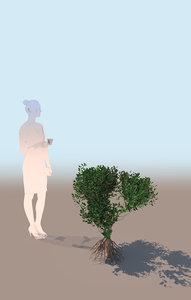 mangrove bush b rhizophora 3D