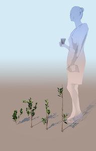 gobotree mangrove grasses rhizophora 3D model