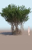 mangrove tree A rhizophora mangle 3D model