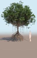 mangrove tree B rhizophora mangle 3D model