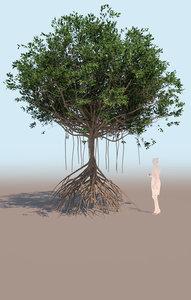 mangrove tree b rhizophora 3D