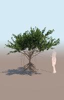 mangrove tree C rhizophora mangle 3D model