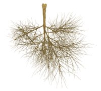 Root Plant with Nodules Octane Render