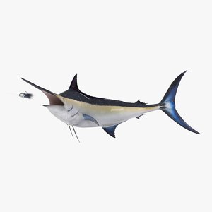 3D black marlin