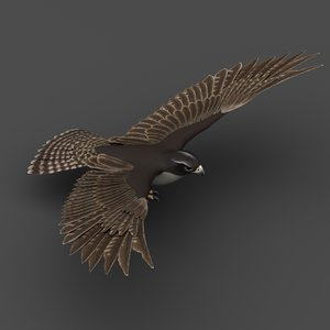 falcon bird animals 3D model