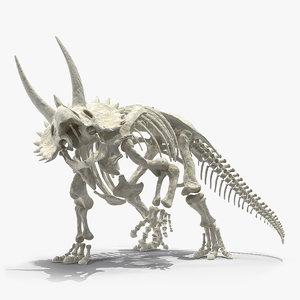 3D triceratops horridus skeleton rigged