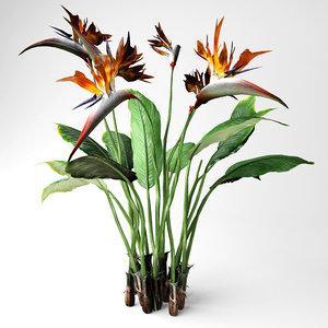 bird paradise plant 3D