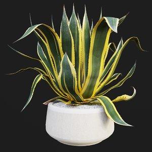 agave americana marginata model