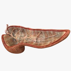 3D human pancreas