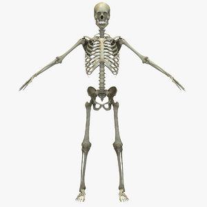 3D human skeletal