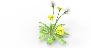 3D flower plant nature