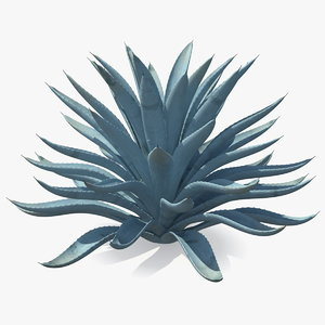 big agave tequilana blue 3D model