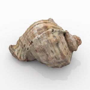 rapana seashell model