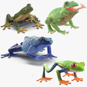 3D model frogs rigged 2