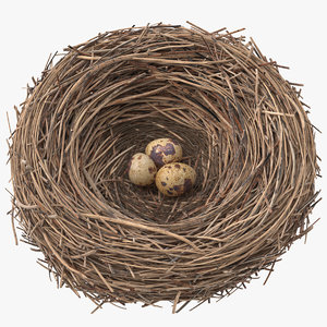 3D bird nest 03 quail model