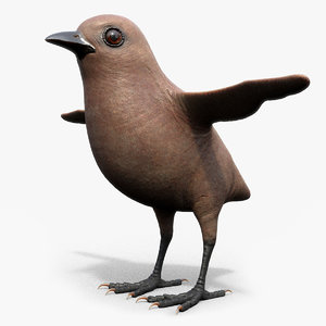 3D bird feathers