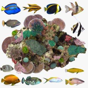 coral reef fish model