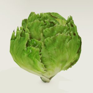 3D lettuce food vegetable