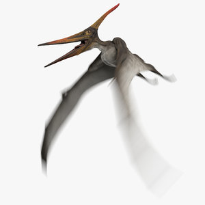 3D model pteranodon longiceps gray animation flying
