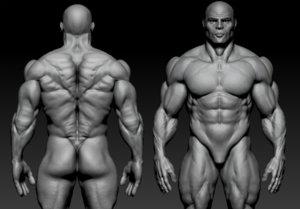 3D base mesh anatomy bodybuilder