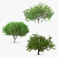 Fruit Trees Collection