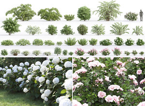 3D flowering bushes